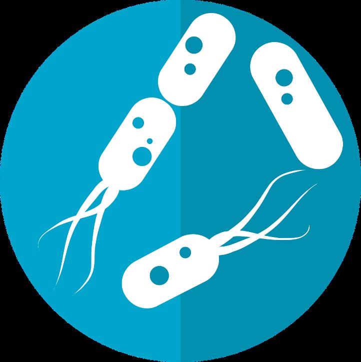 Bacterias con flagelos